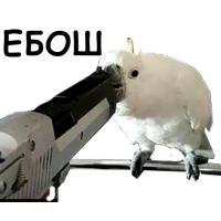 Набор стикеров Блядские папуги